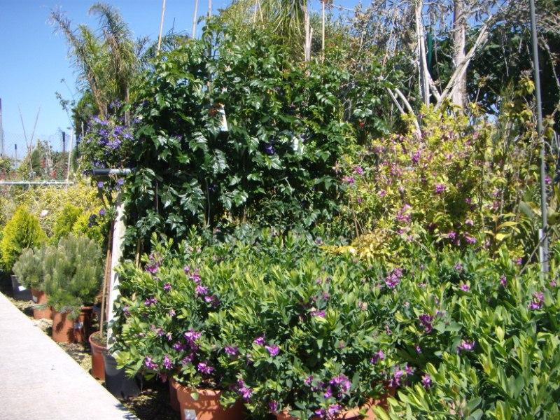 Viveros reyes dise o y construcci n de jardines for Viveros de plantas de jardin