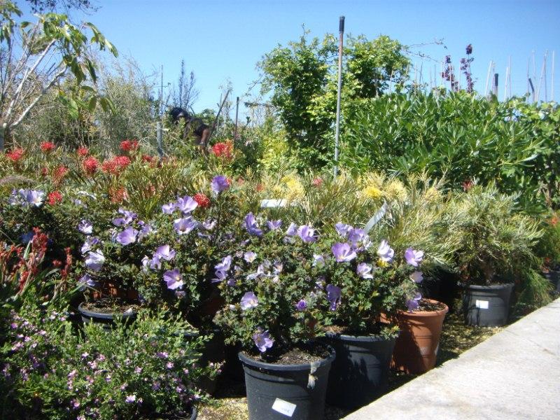 Viveros reyes dise o y construcci n de jardines - Tipos de plantas de exterior ...