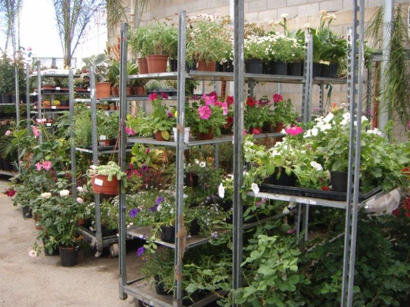 Viveros reyes dise o y construcci n de jardines for Viveros frutales wikipedia